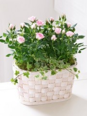 Pink Rose Basket