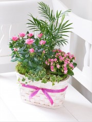 Happy Birthday Mixed Planted Basket with Belgian Chocolates