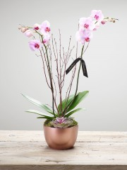Orchid Pearl Arrangement